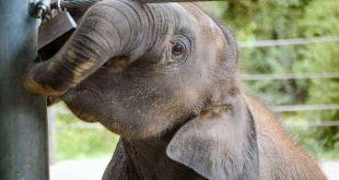 El cuento del elefante encadenado.
