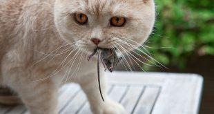 Fábula: El gato y los ratones.